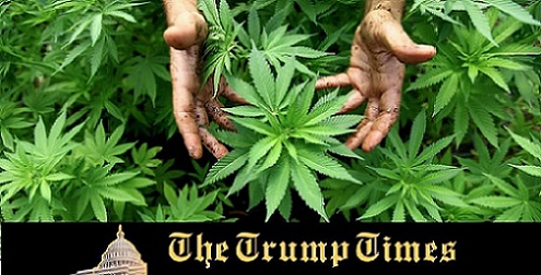 Will Marijuana Determine Who's Hands Get Congress?