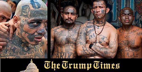 "MS-13 More Like Insects: Don't Insult ""Animals""!"